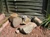 Friendly Stones