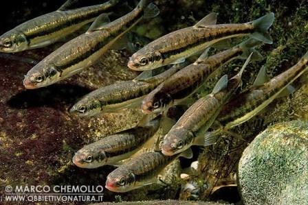 Gc42q1v Hloucela Pstruhovy Revir Trout Preserve Multi Cache In