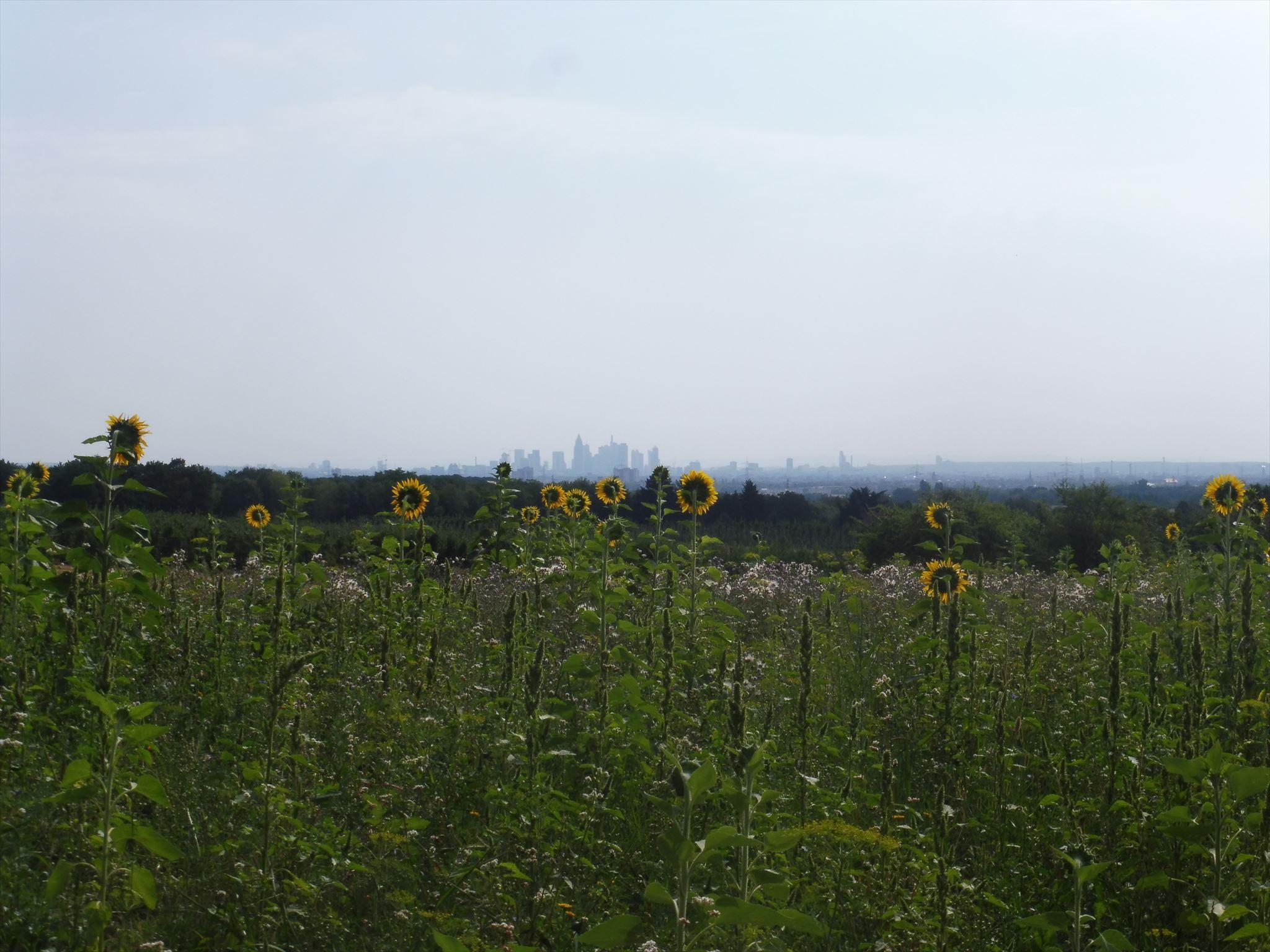 Skylineblick in den Bauernwiesen