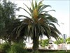 04 palmeira