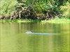 Gator 1 log image