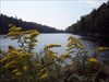 Half Mile Pond with golden rod in the forground