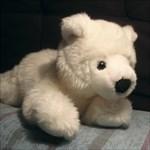 Isbjörn25