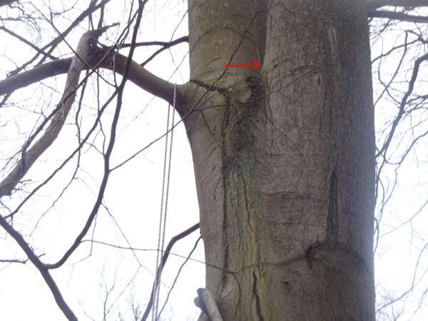 Kletterausrüstung Geocaching : Gc1n788 kleine kletterei traditional cache in schleswig holstein