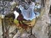Seiva log image