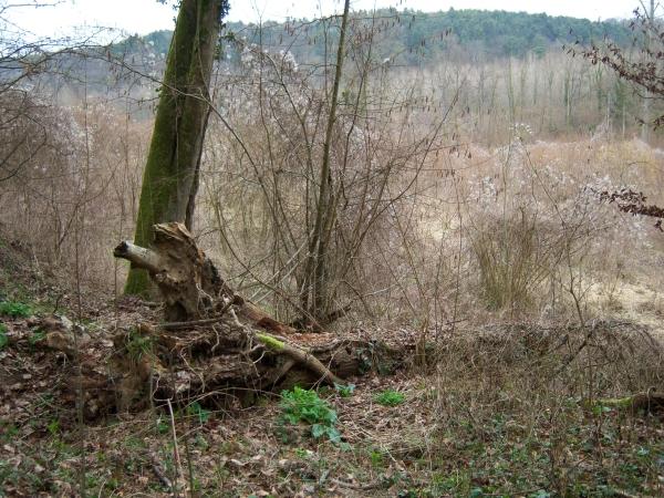 arbre au sol