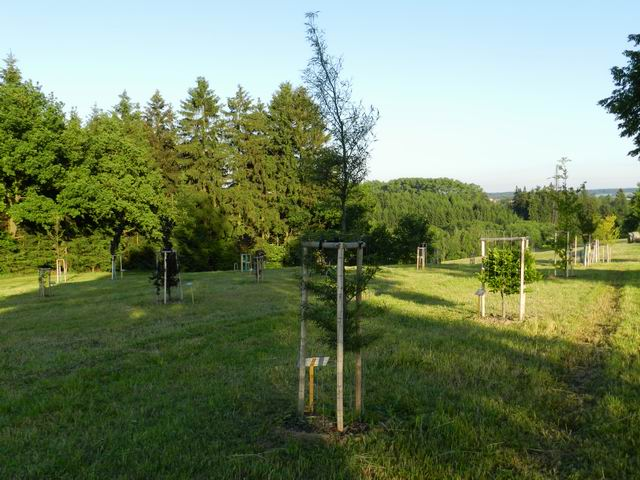 Bukove arboretum v Bukove.