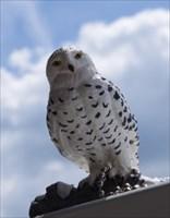 """Posteule Hedwig"" am Start"