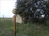 Herdade da Ordem - Anta protegida por uma cerca