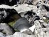Poço no Pulo do Lobo