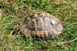 tortoise with sensor