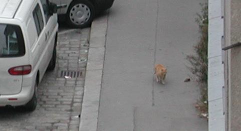 Der gestiefelte Kater auf der Straße