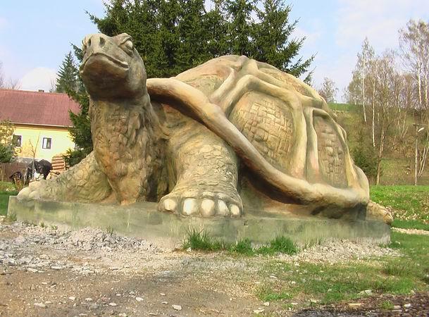 Zelva / Turtle.