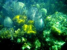 Korálový útes v Southwater Cay