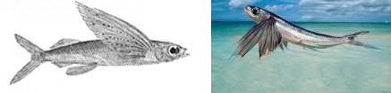 Fliegende fische mittelmeer