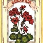 uranium geranium