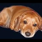 ~Mystery Dog~
