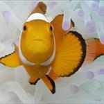 Die Nemos