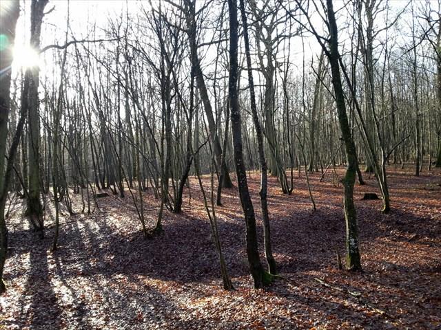 Le Bois des Fourneaux