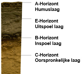 Opbouw Podzolbodem