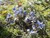Blumengruß vom J uli us...