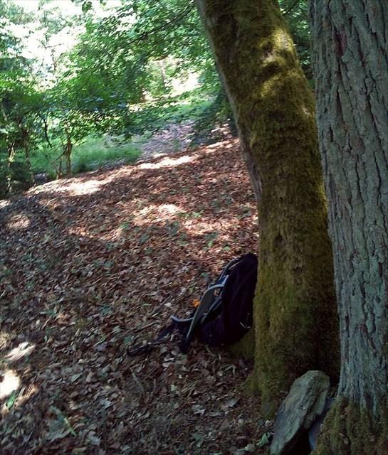 Burg Waldeck 1 Geocache am Doppelbaum