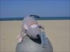 Hickory at Virginia Beach