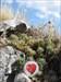 Westerwald-Eva at La ruina de Montemayor