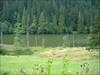 Lacul Rosu 01