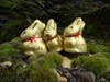 3 Osterhasen in freier Wildbahn....