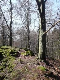 Nenapadny vrcholek skalky