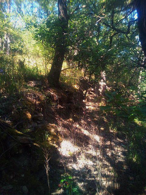 Weg am Steinbaum