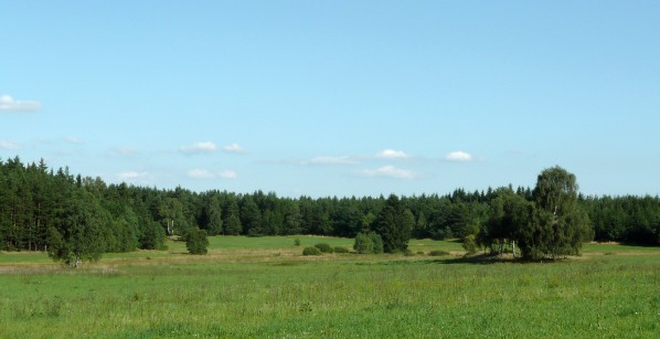 Jižní část mokřadů
