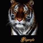Tiger1962