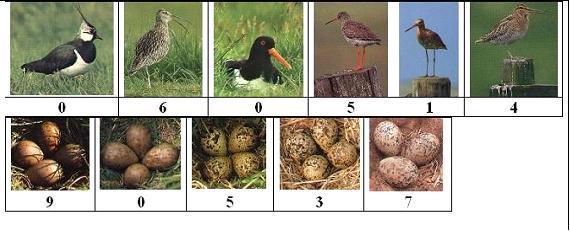 weidevogels en eieren