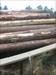 Tiny rabbit guarding the logs