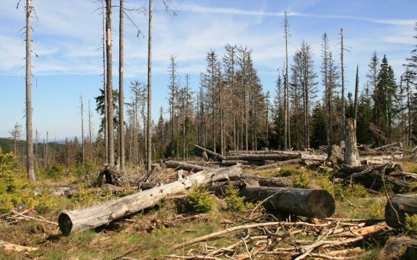 Dřevo na mýtině