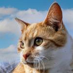 KittyKatCaches