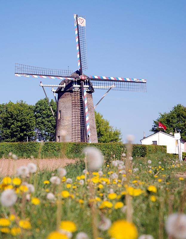 PA6TIEN Van Tienhovenmolen Wolfhuis springtime