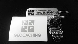 Owl ready for adventure