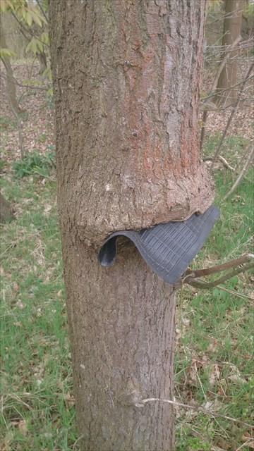 Der hungrige Baum