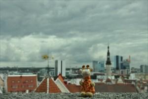 Ikea the Giraffe traveller in Tallinn Old town
