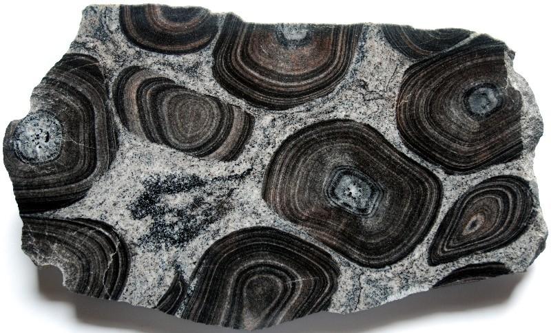 Syenodiorite orbiculaire, montrant des orbicules dissouts lors de la mise en place de la matrice, Virvik, région de Porvoo (Finlande).