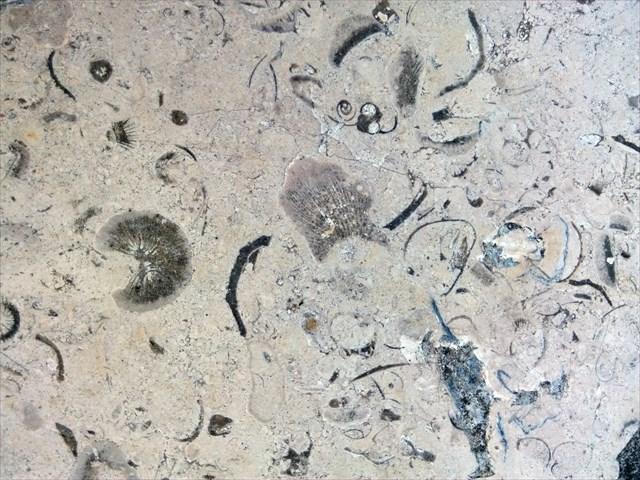 Calcaire de Comblanchien