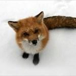 Firefox.3