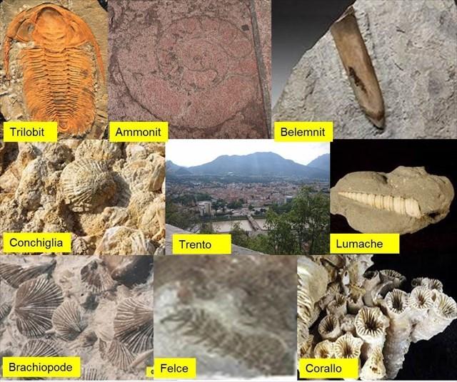 metodi per la datazione di rocce e fossili utilizzati dai paleontologi