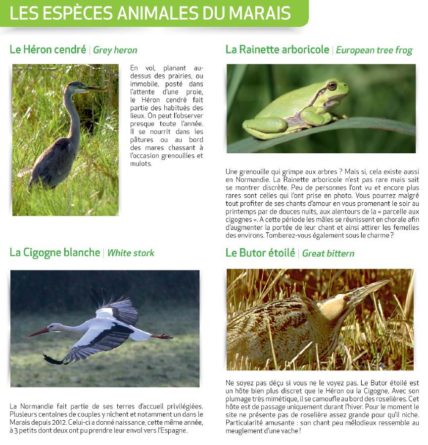 Les espèces animales du marais - Source : https://www.indeauville.fr - Crédit photo : Grégory Wait, P.Le Bris, P.Mignon