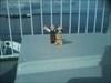 2014-05-02 10.03.41 On the ferry: Sweden - Denmark