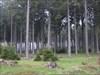 Wald!