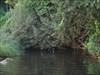 O pato vadio log image